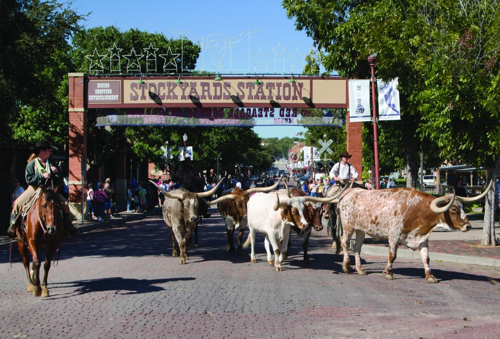 Rather than the running of the bulls, this is sort of the leisurely stroll of the Texas Longhorns at the Fort Worth Stockyards.  (Photo: Carol M. Highsmith)